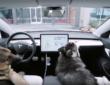 Du nouveau chez Tesla… pour les chiens!